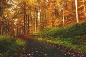 central michigan fall foliage