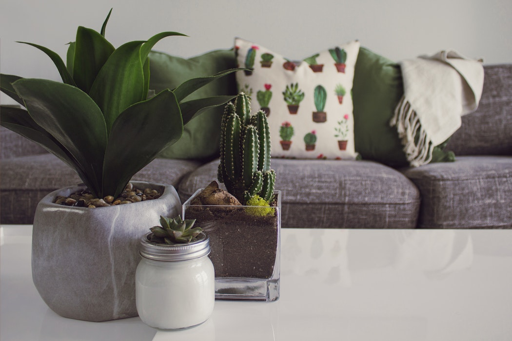 A living room with plants on the table.
